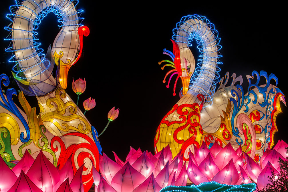 NC Chinese Lantern Festival - Travel Obscura