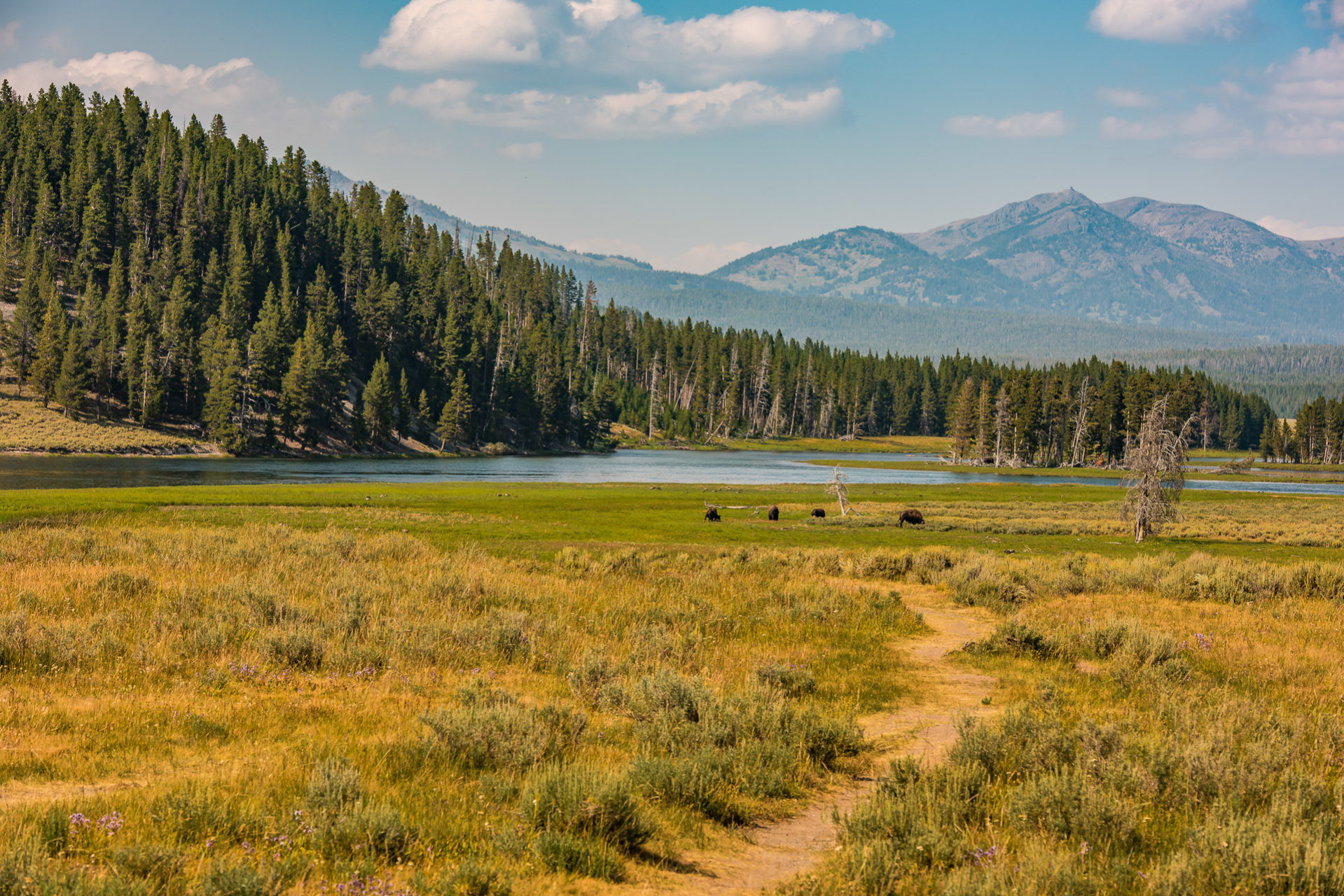 Hayden Valley - Yellowstone National Park, Wyoming - Part 4 - Travel Obscura