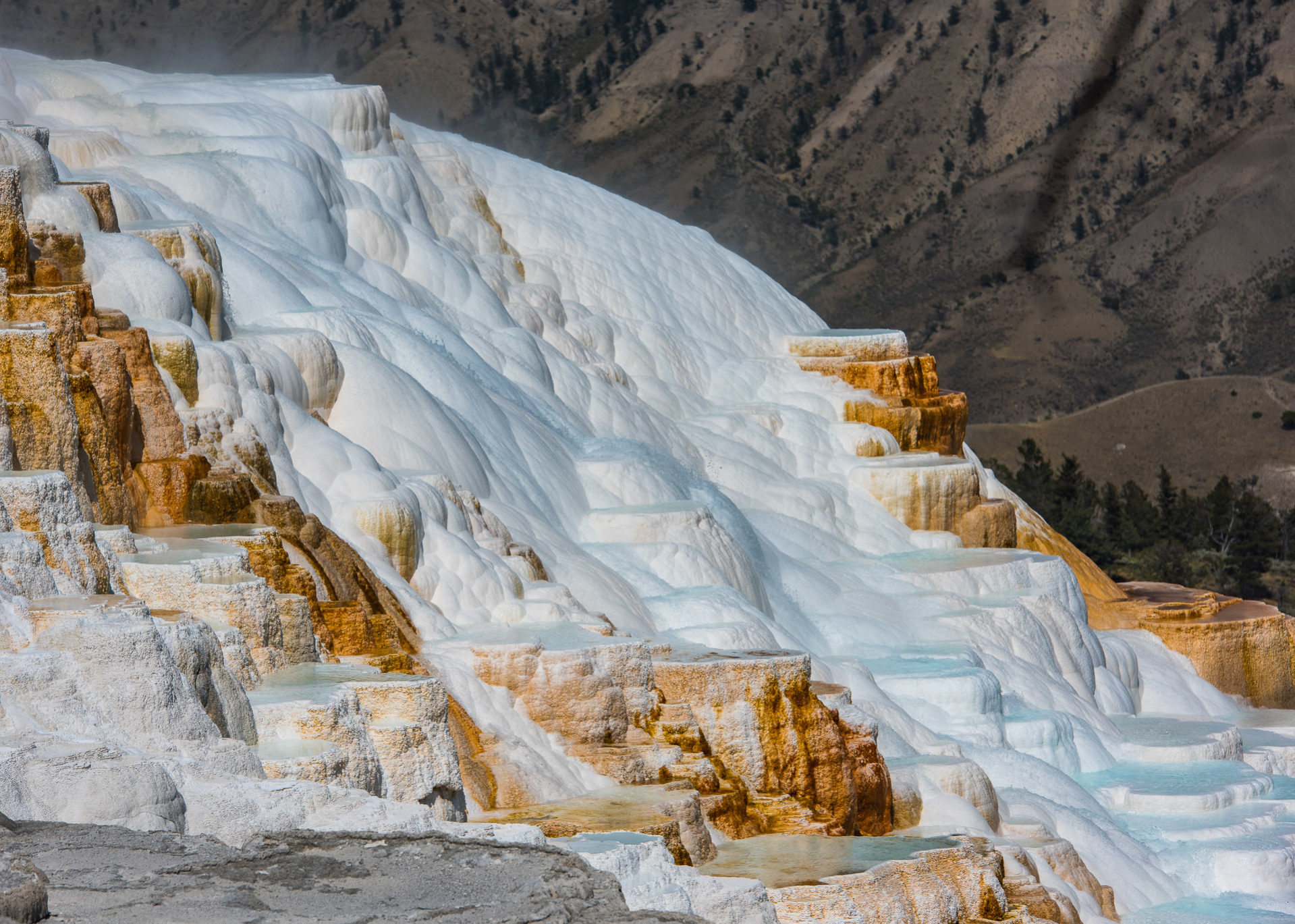 Mammoth Hot Springs - Yellowstone National Park, Wyoming - Part 7 - Travel Obscura